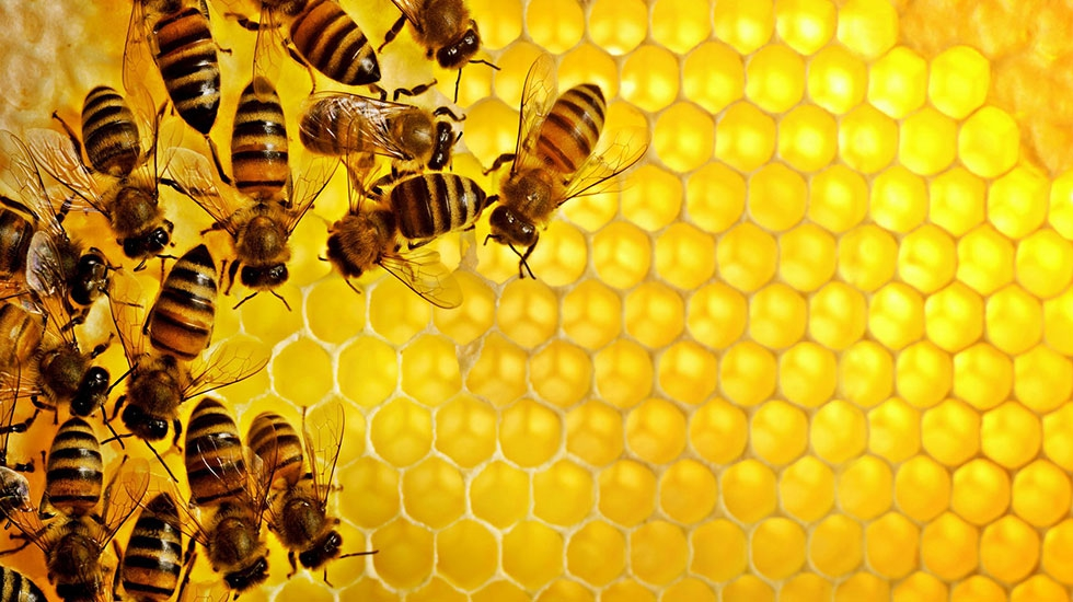 Bees-and-comb-2