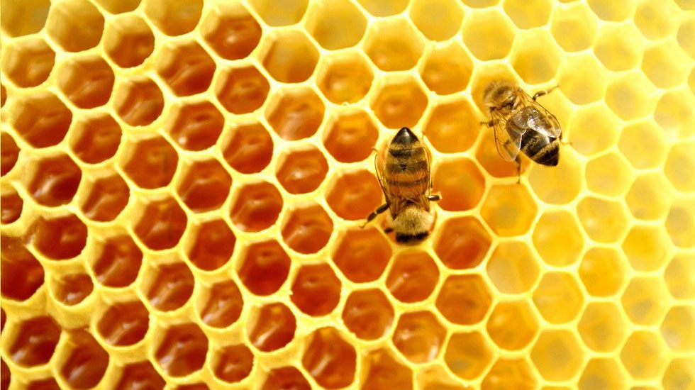 Bees-and-comb-3